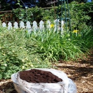 Coffee Grounds Can Be Used For Acid Loving Plants Such As Roses Rhododendrons Hydrangea Azaleas Camilla S Blueberries Strawberries
