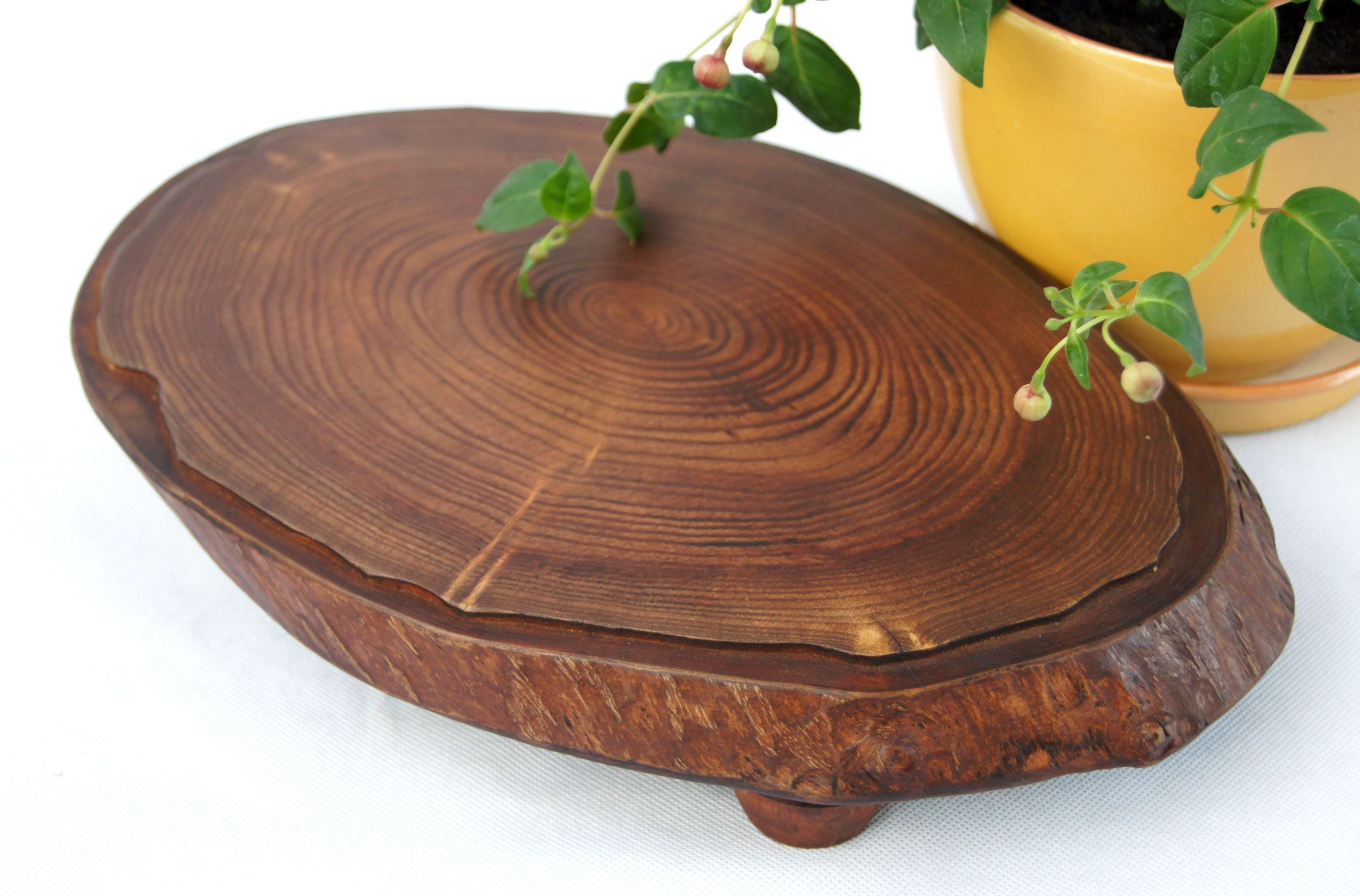Small Live Edge Tree Stump Plant Stand Indoor, Flower Stand,