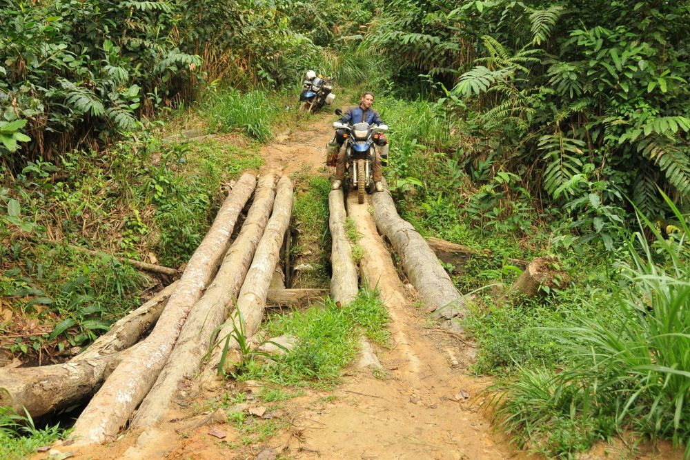 The medicinal resource being sought after is their nut oil that is used by the pygmy people of the congo. Congo Jungle Africa Orbital Africa Jungle Congo