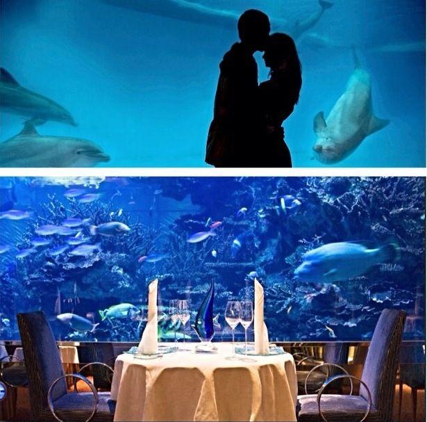Fun Day At The Aquarium. Propose This Date At