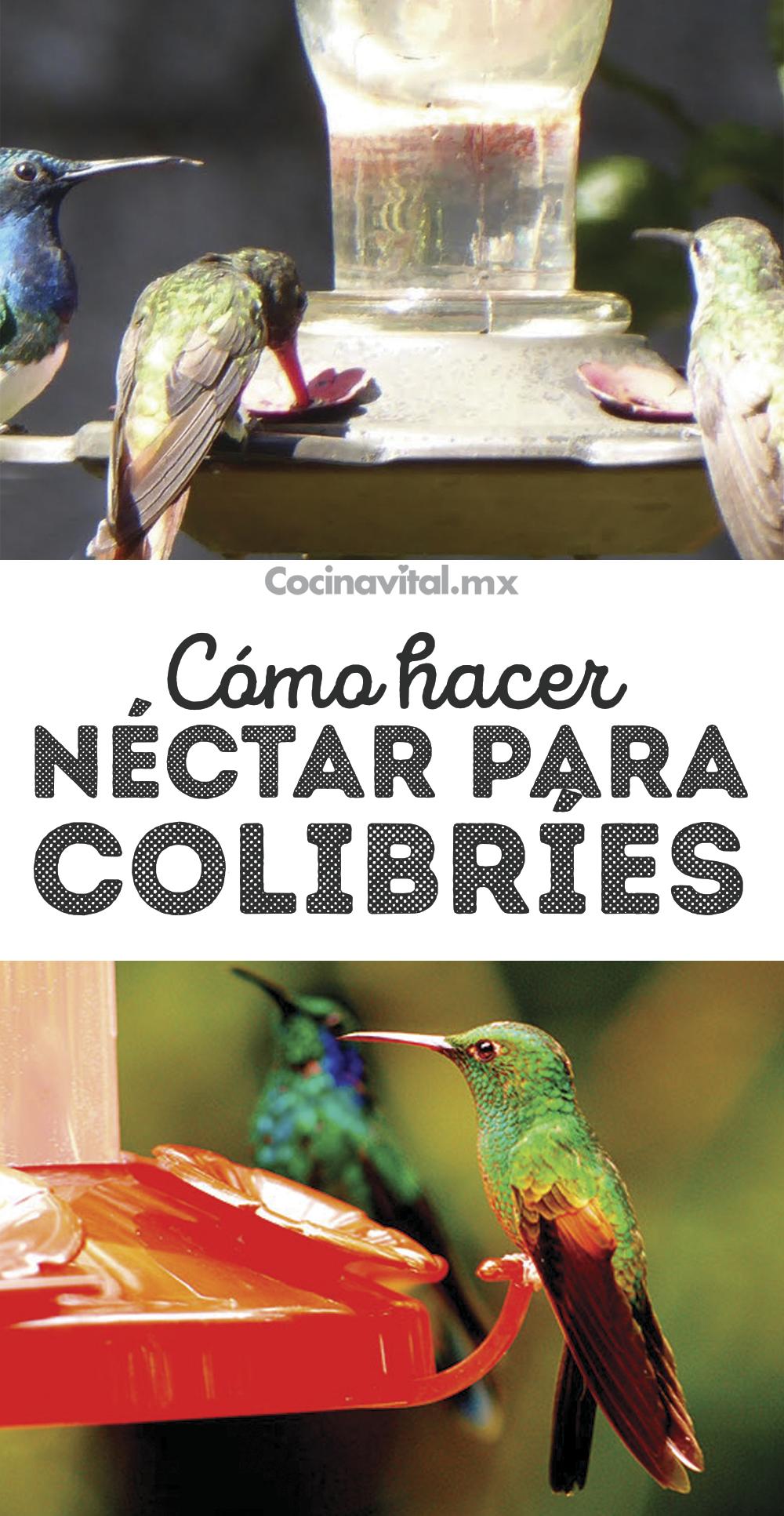 Como Hacer Nectar Casero Para Colibries Y Atraerlos Al Hogar Comederos De Colibris Bebedero Para Aves Jardin De Productos Comestibles
