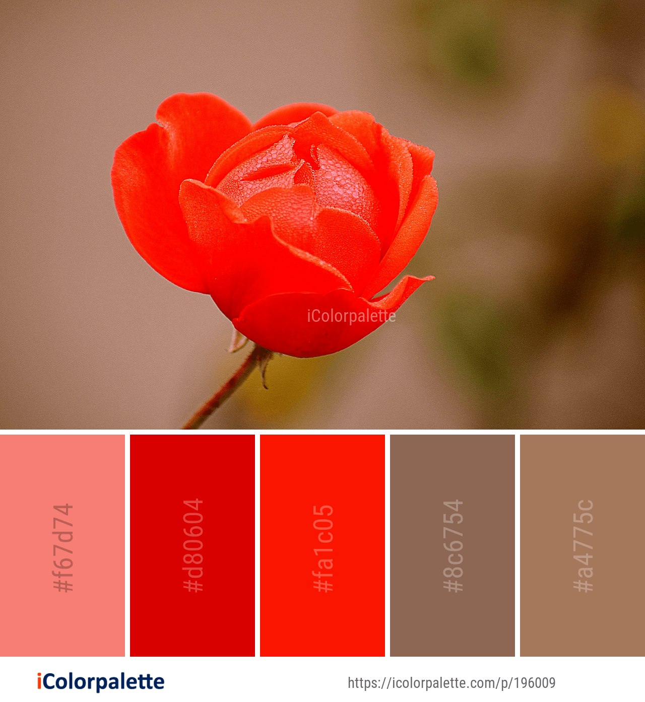 Color Palette Ideas From 8835 Flower Images Icolorpalette Red Colour Palette Shades Of Red Color Color Palette
