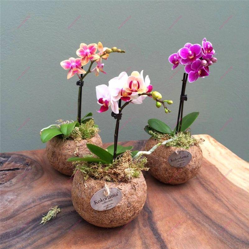 Mira Lo Que He Encontrado En Aliexpress Orchid Flower Arrangements Fresh Flowers Arrangements Orchids