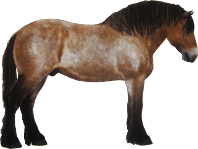 cheval de trait polonais