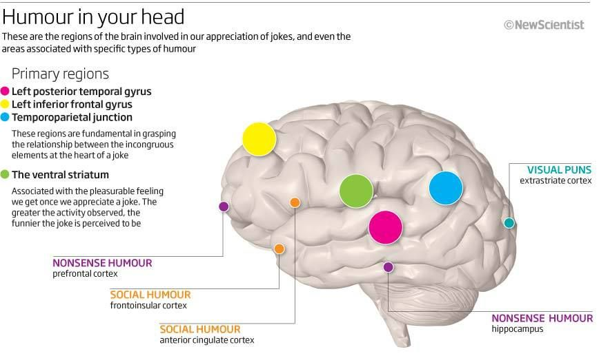 Neuroscience Of Humor Neuroscience Behavioral Neuroscience Philosophy Of Mind