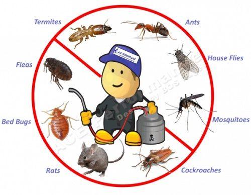 Jasa Pengendalian Pest Control A Pest Control Insect Control Nyamuk Kecoa Semut Lalat Dll B Rodent Con Pest Control Pest Control Mice Termite Control
