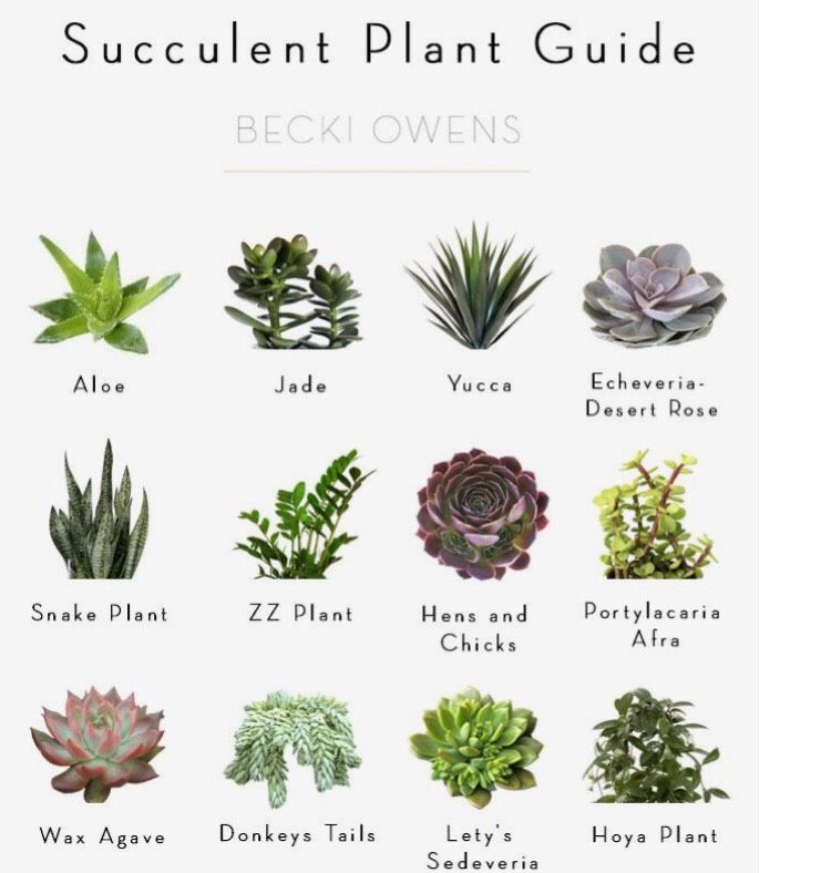 Musely Plant Guide Planting Succulents Room Goals Cactus Garden Ideas Birthday