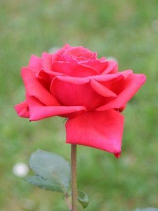 Gambar Bunga Flowers And Gardening Ideas Tags Gambar Bunga Matahari Gambar Bunga Mawar