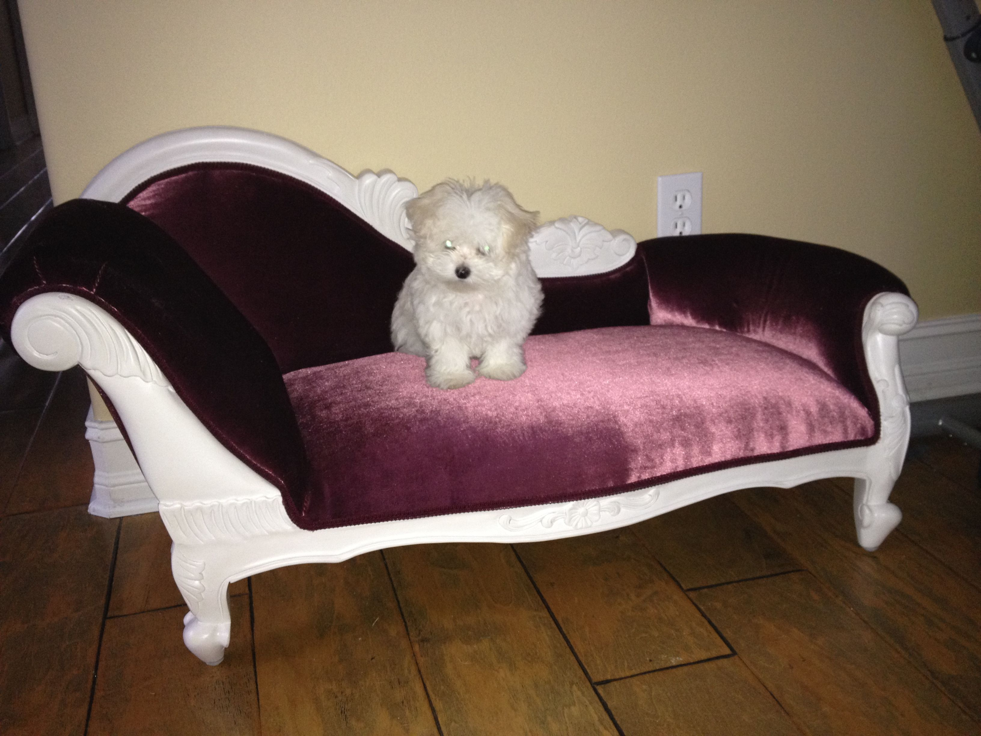 Luxury Dog Furniture Fancy Luxury Dog Beds Pampered