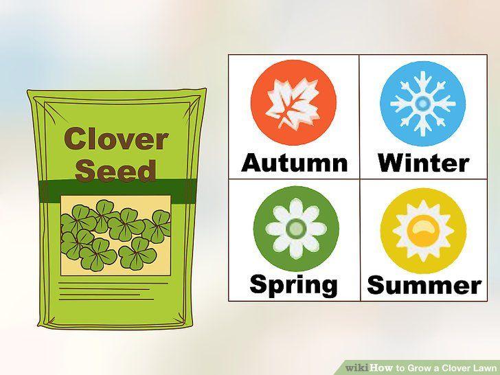Grow a clover lawn clover lawn clover seed lawn