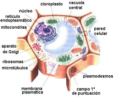 Una Celula Concept Outdoor Blanket Cel