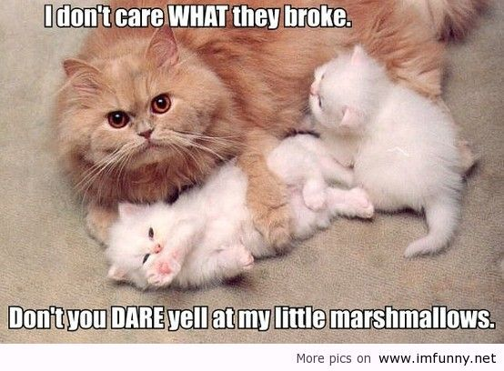 Funny Animals And Funny Sayings Funny Animal Quotes Cat Quotes