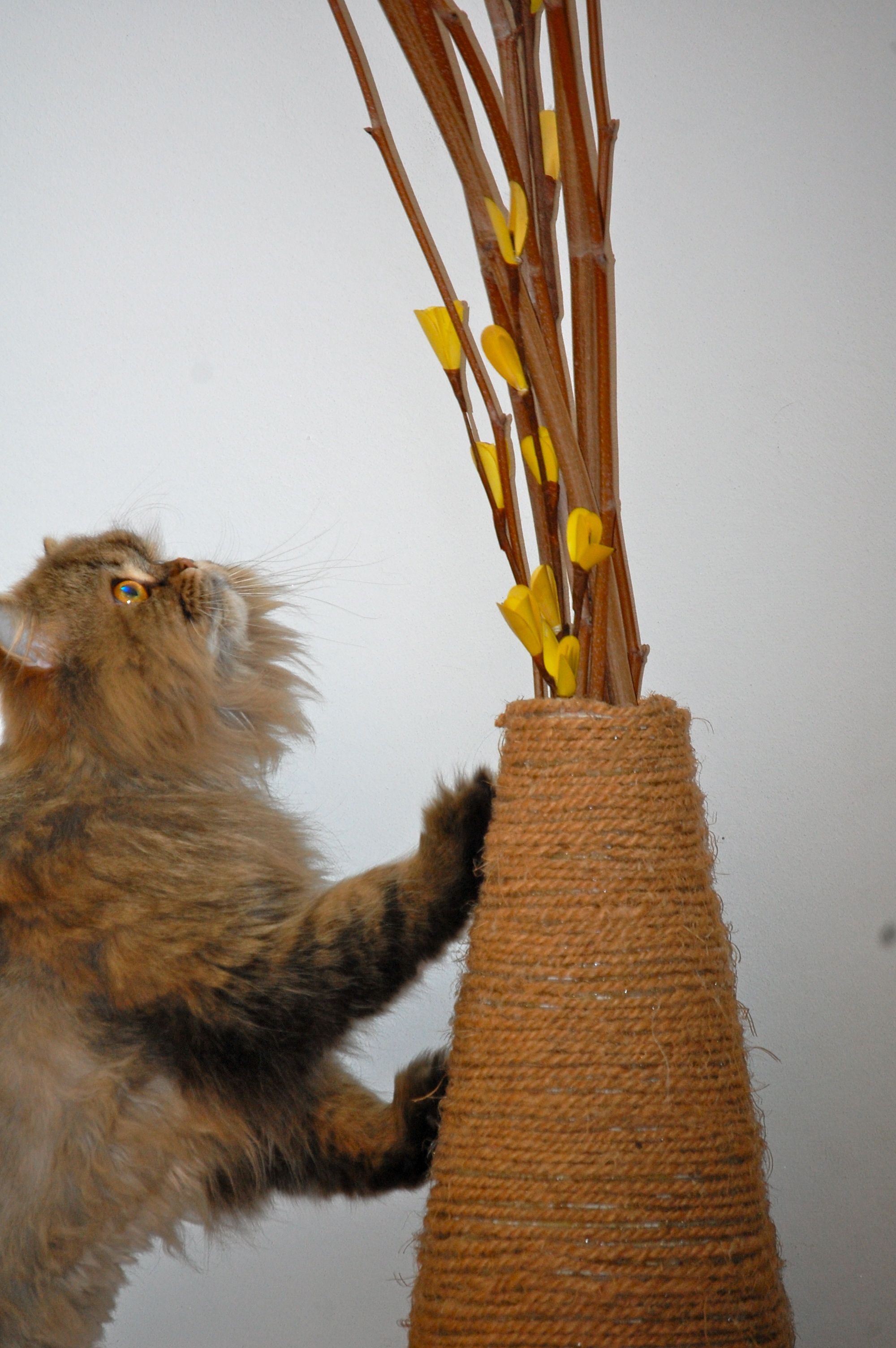 DIY Vase Scratching Post (Update) | Scratching post, Cat ...