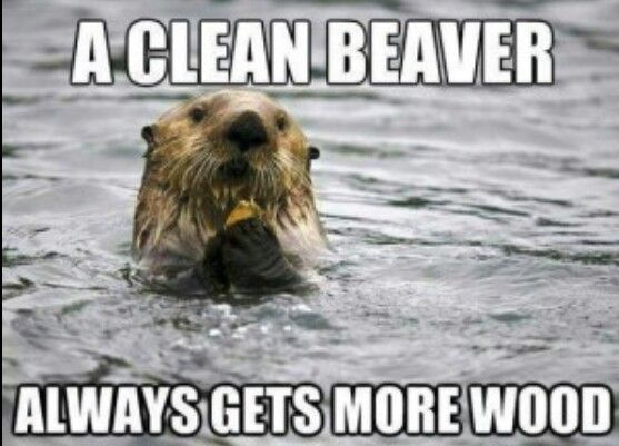 Dirty beaver jokes