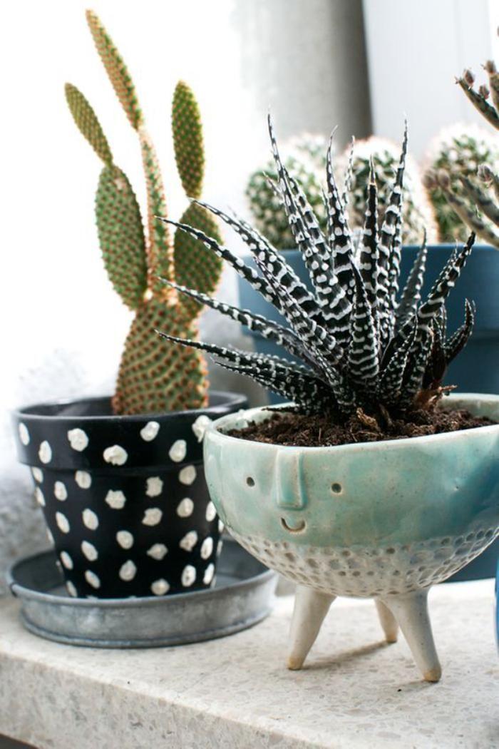 d corez avec les plantes grasses d 39 int rieur plantes grasses cactus et pots. Black Bedroom Furniture Sets. Home Design Ideas