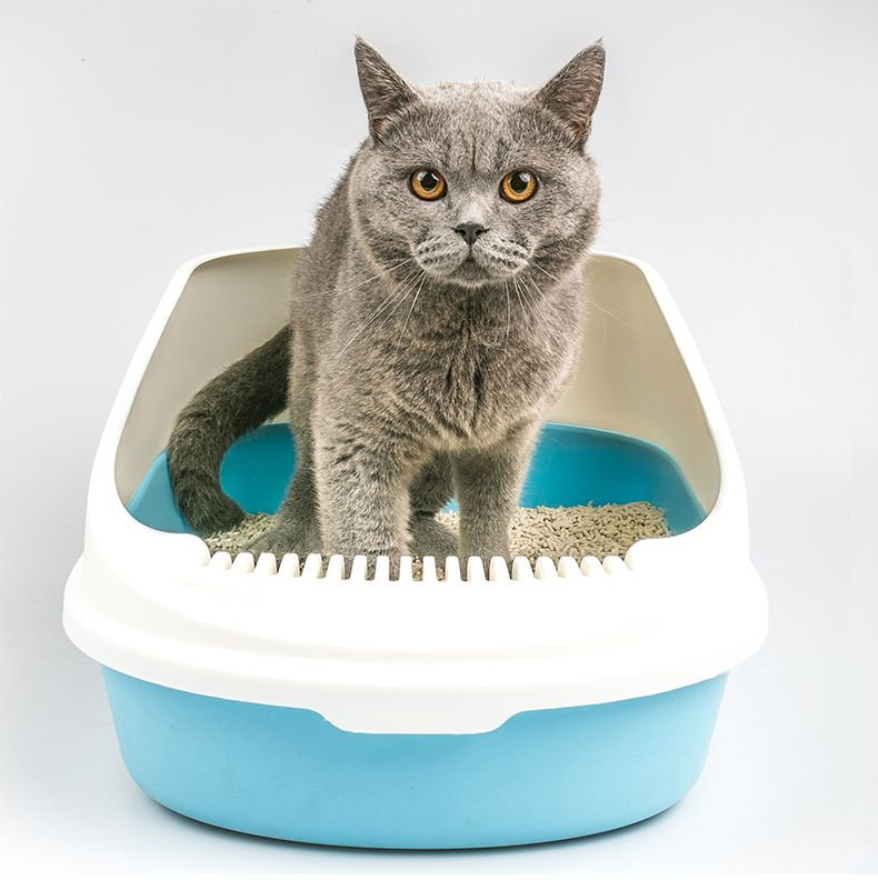 Factory wholesale large cheap cat litter box Cheap cat