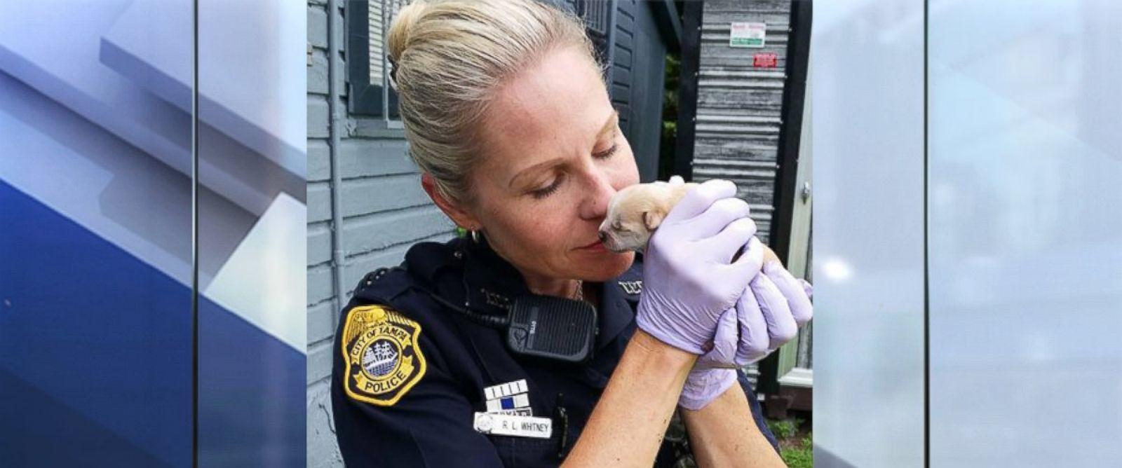 Pin On Animal Causes Animal Welfare