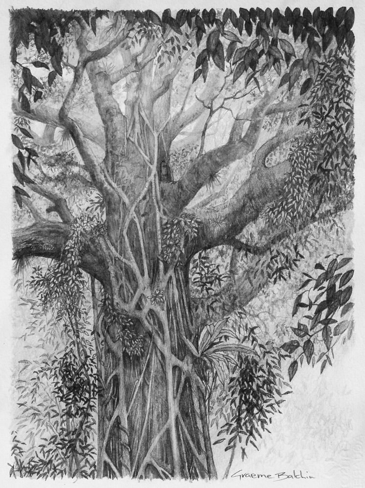 Strangler Fig by graemeb on DeviantArt Coloring pages Pinterest - new coloring page fig tree
