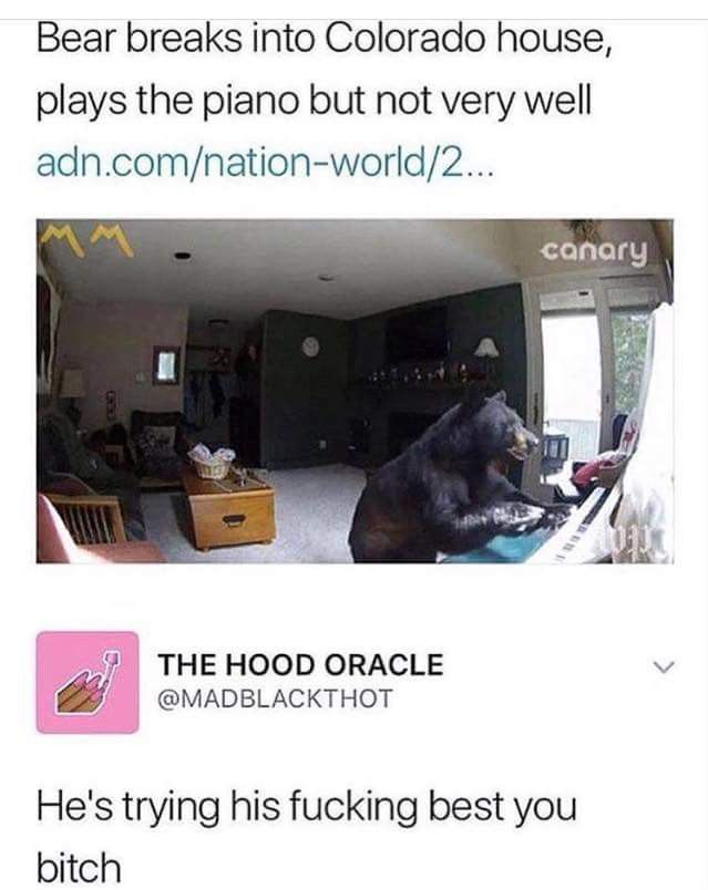 Poor bear. All he wants to do is play the piano Funny
