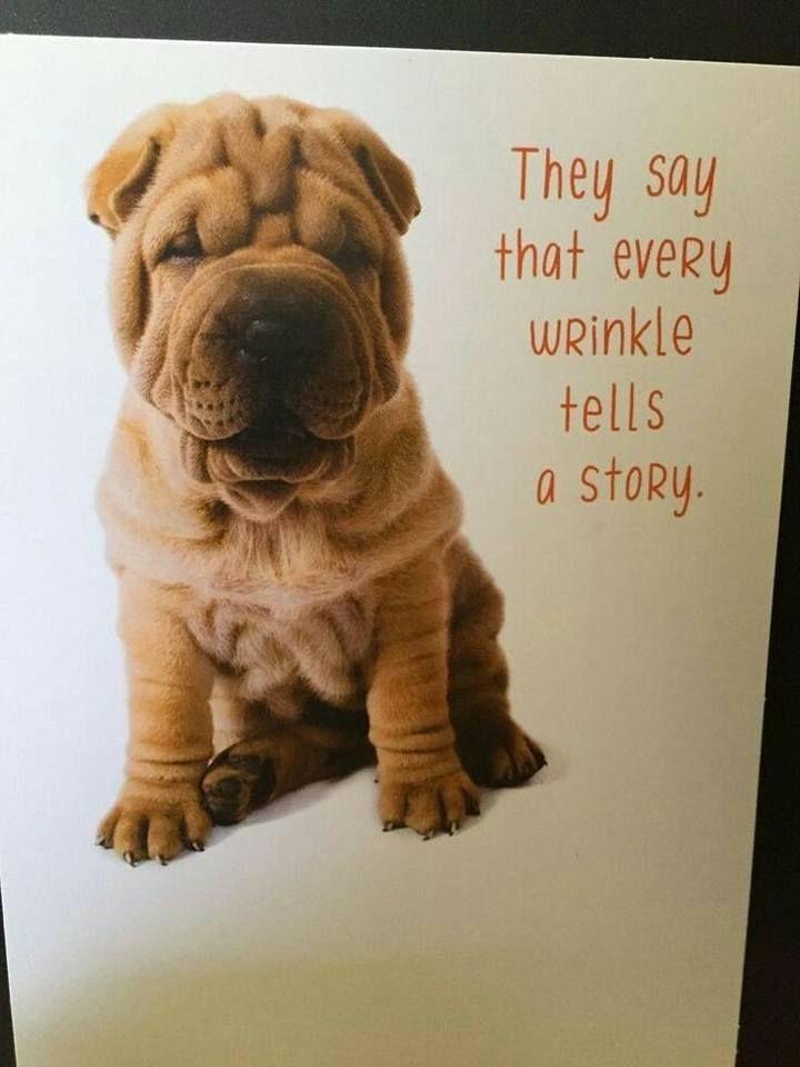Worst puppy food uk