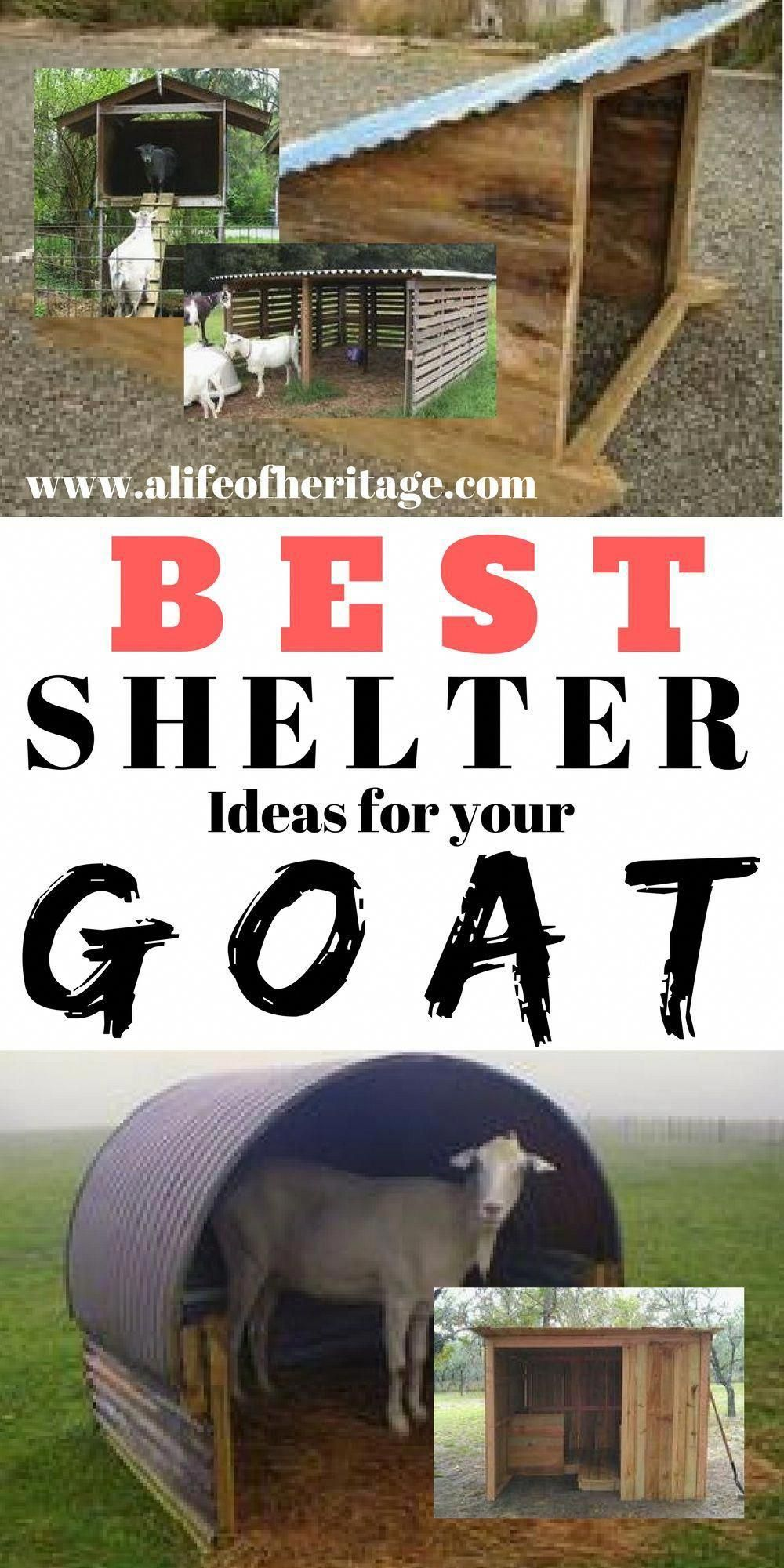 How To Raise Goats: Natural Goat Care for Meat, Milk and ...