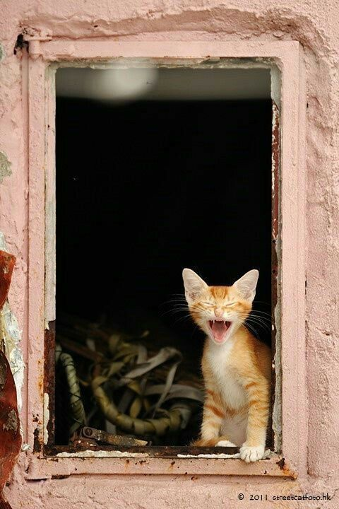 Pin by Finnegan Paradise on Cats in Windows Cute cats