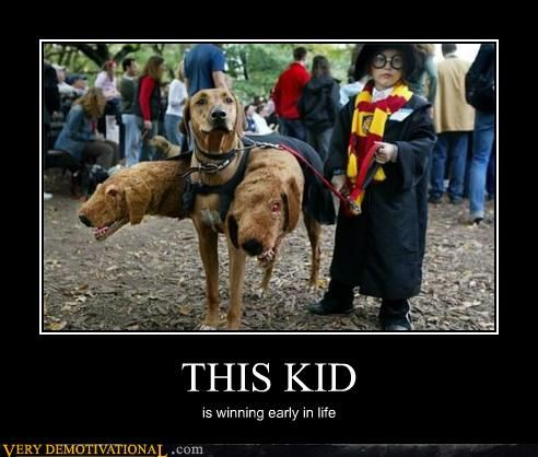 Pin By Holly Jackson On Demotivational Harry Potter Dog Harry Potter Costume Harry Potter Cosplay