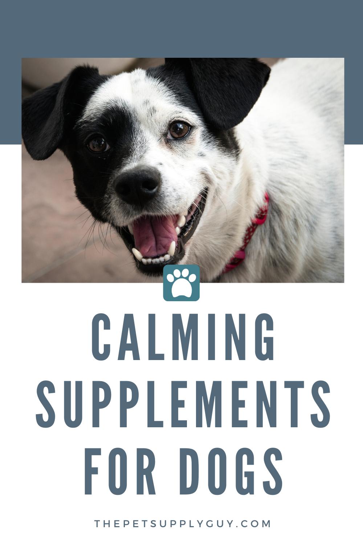 Best Dog Calming Pills Review The Pet Supply Guy Dog Calming Pills Calm Dogs Dogs