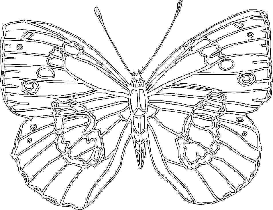 Butterfly Big Coloring Pages For Kids Printable Butterfly Coloring Page Coloring Pages Inspirational Kids Printable Coloring Pages