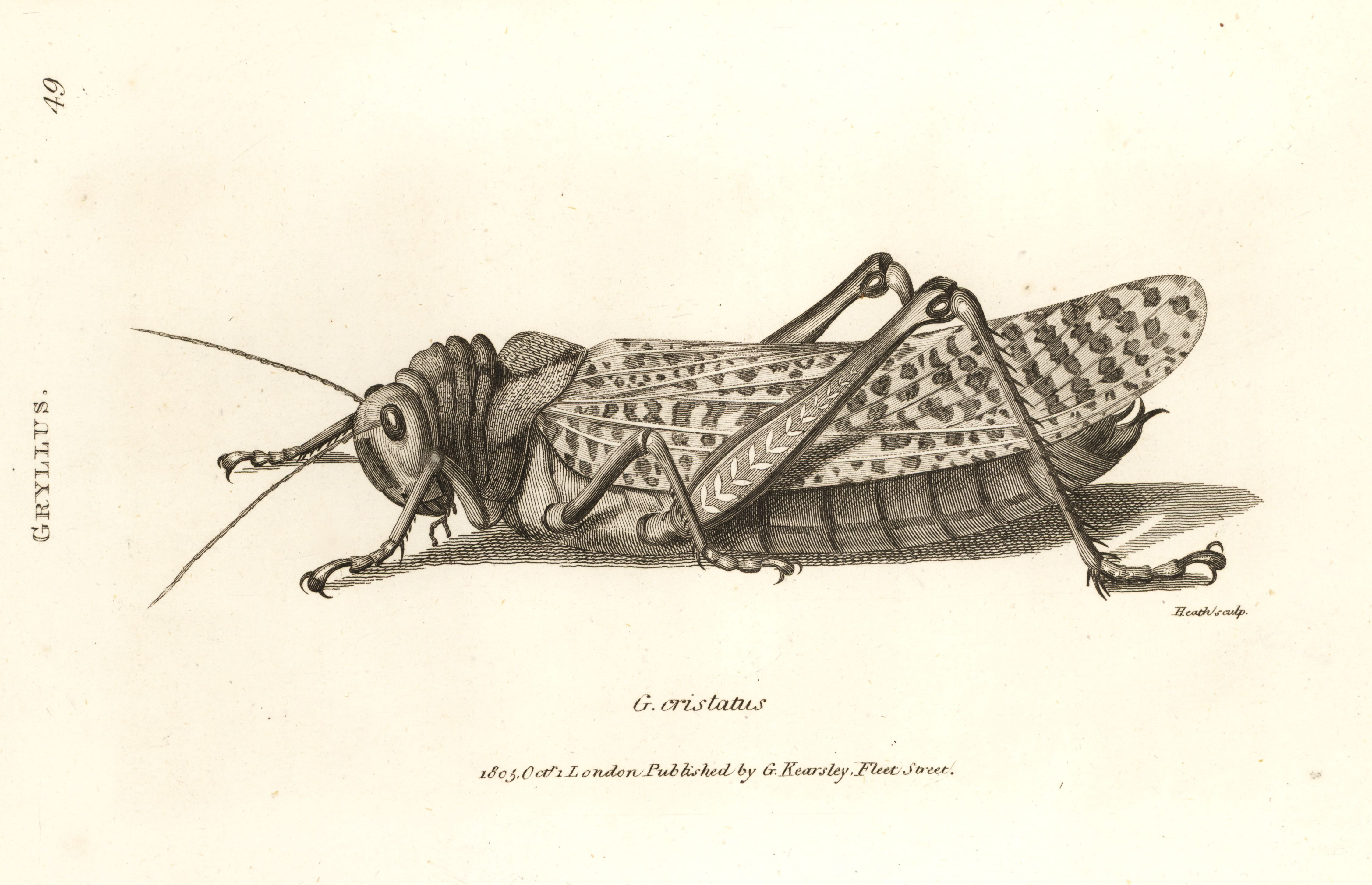 11719-locust_4.jpg (4504×2904)