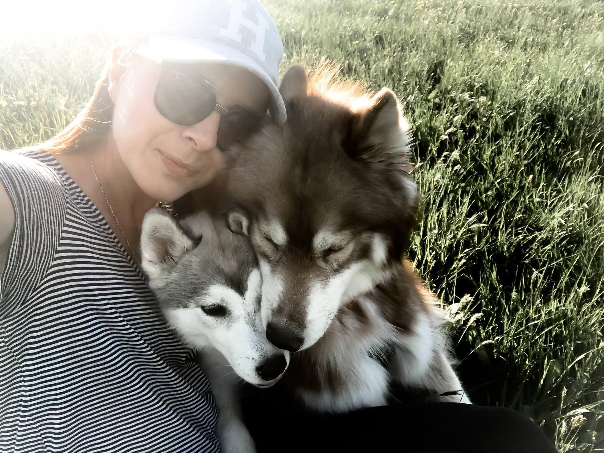 Alltag mit Hund und Welpe, Alltag mit einem HuskyWelpen