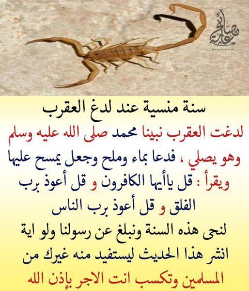 Pin By Gamila El Zein On Deen Islam Beliefs Hadith Quotes Cool Words