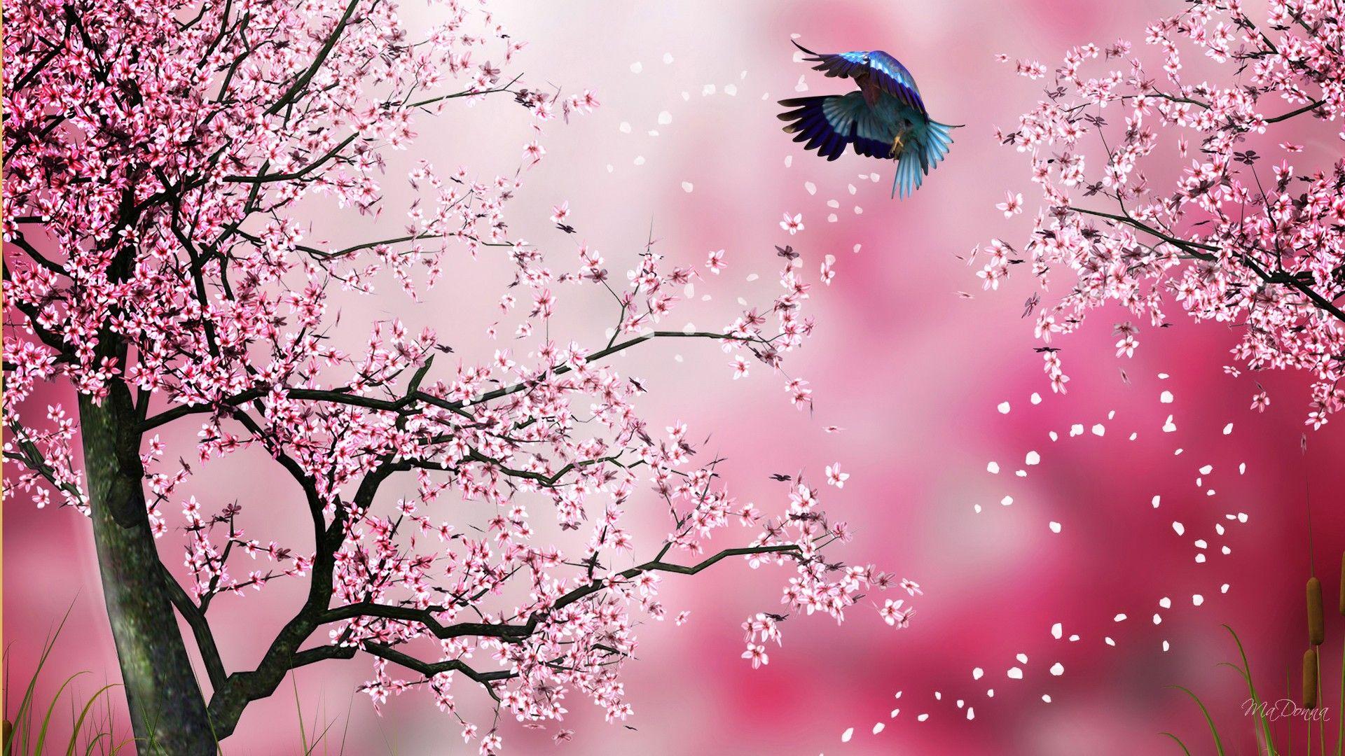 Sakura Pink Cherry Blossom Wallpaper Sakura Painting Tree Hd Wallpaper