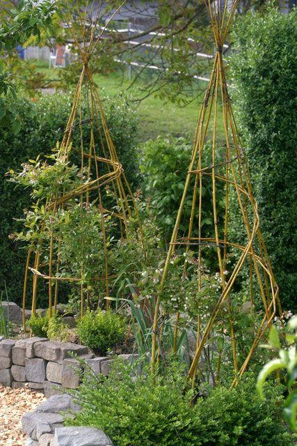 Im Garten Mit Mitglied Cosmea Im Sommer Leben Wir Praktisch Draussen Garten Cosmea Gartendesign Ideen