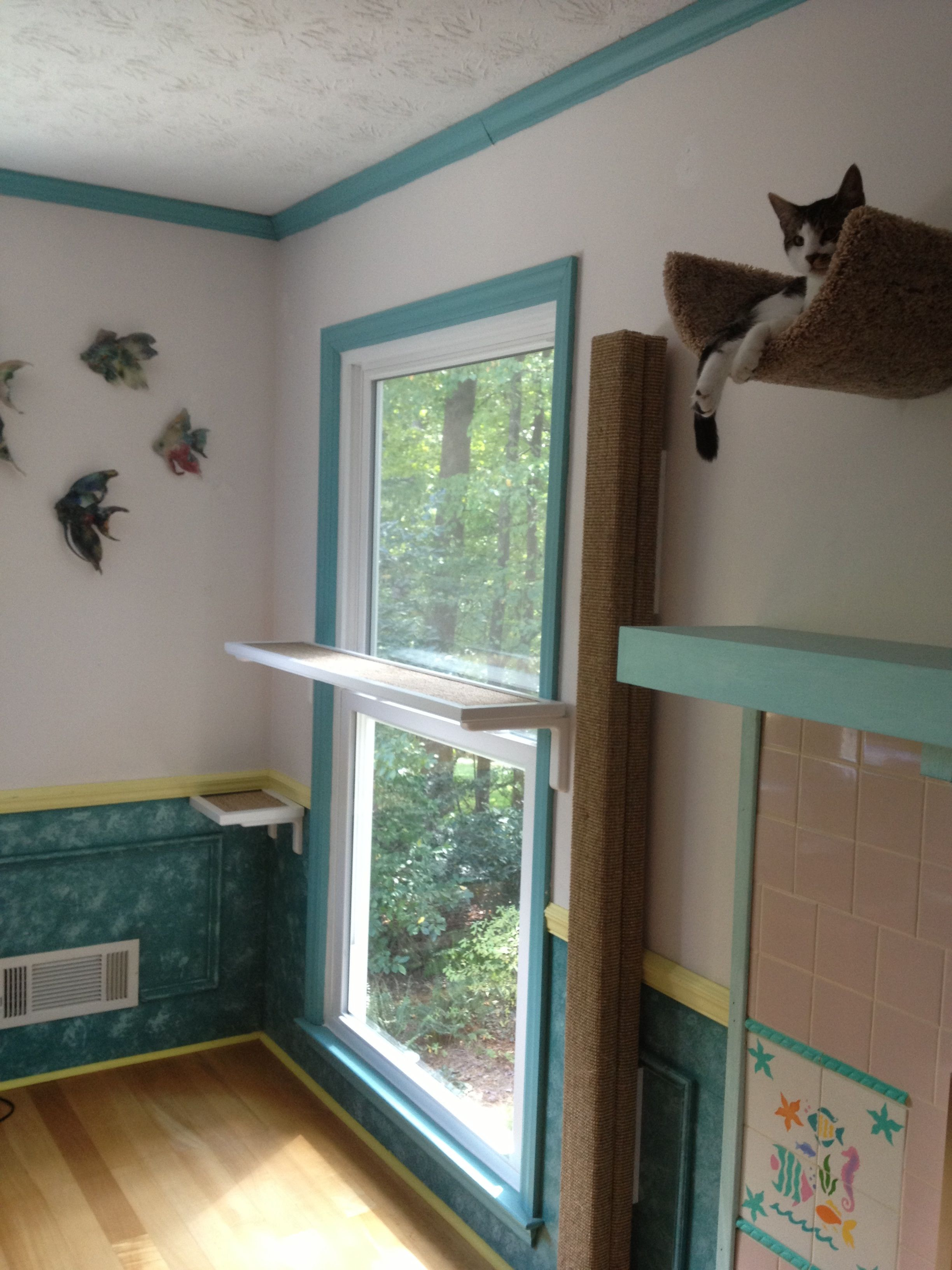 Cat shelf across a window lets cats look outside easily also has cat shelf across a window also has a great vertical climbing pole but jojo might not use one i am not a big fan of using carpet for the pole amipublicfo Image collections