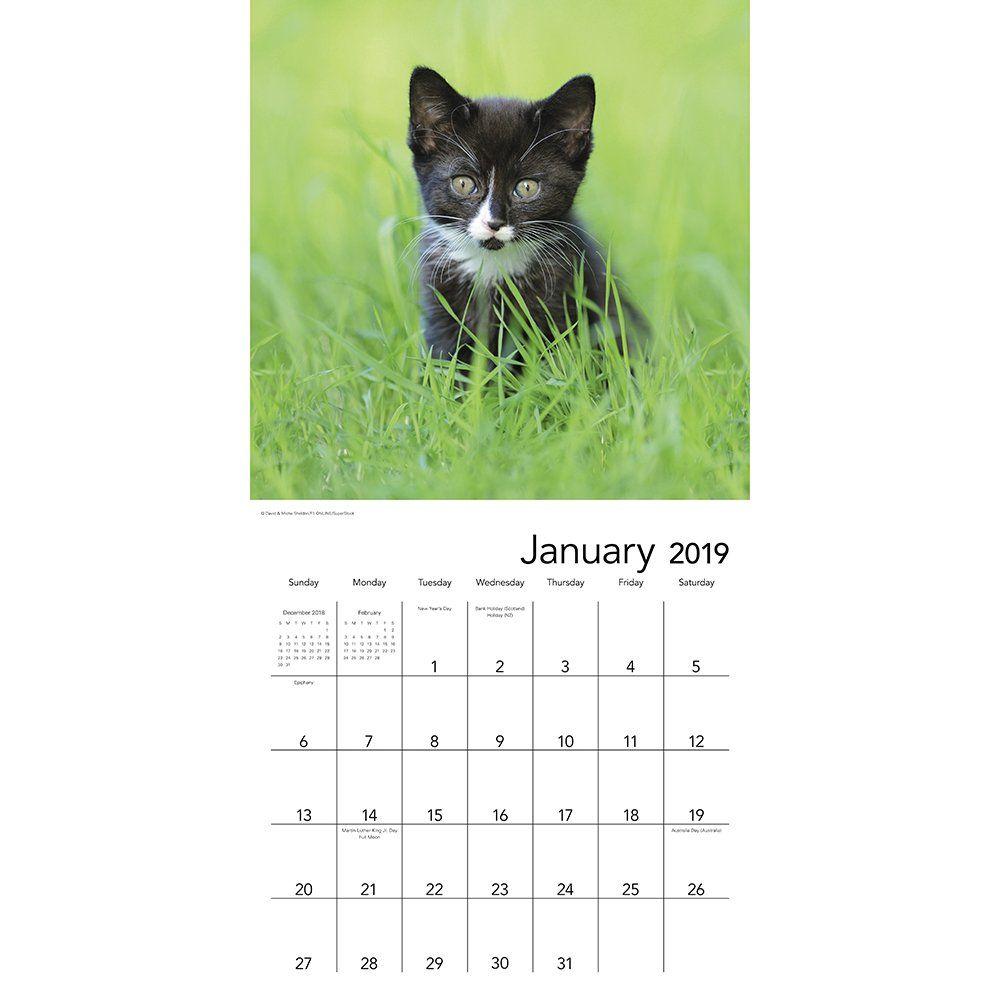 Kittens Wall Calendar 2019 Calendar July 1 2018 Calendar Wall Kittens July Wall Calendar Calendar Kittens