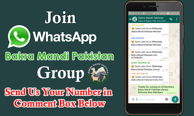 Join WhatsApp Bakra Mandi Pakistan Group Send Us Your Number in
