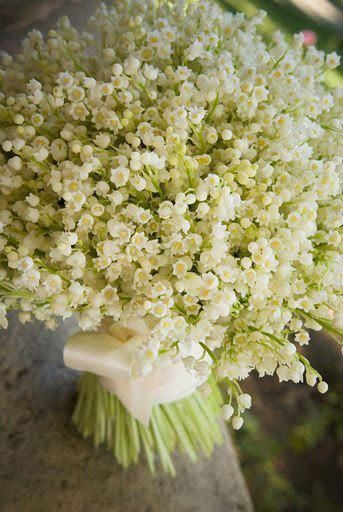 Lily of the valley,with translucent pale green stems