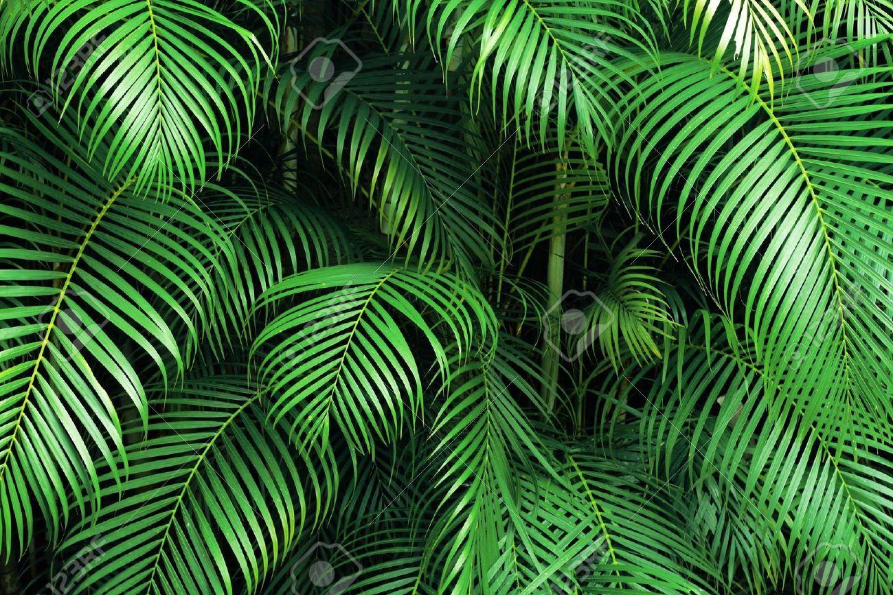 Palm Leaves Craftbnb