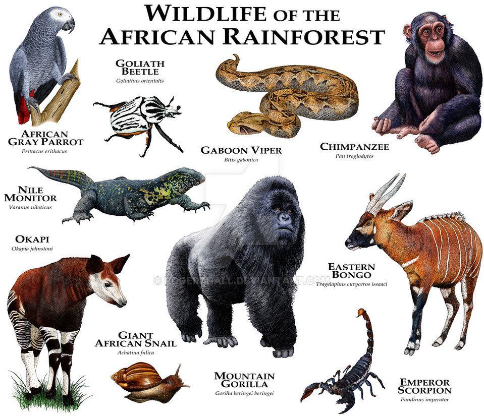 Fine art illustration of some of the unique animals native