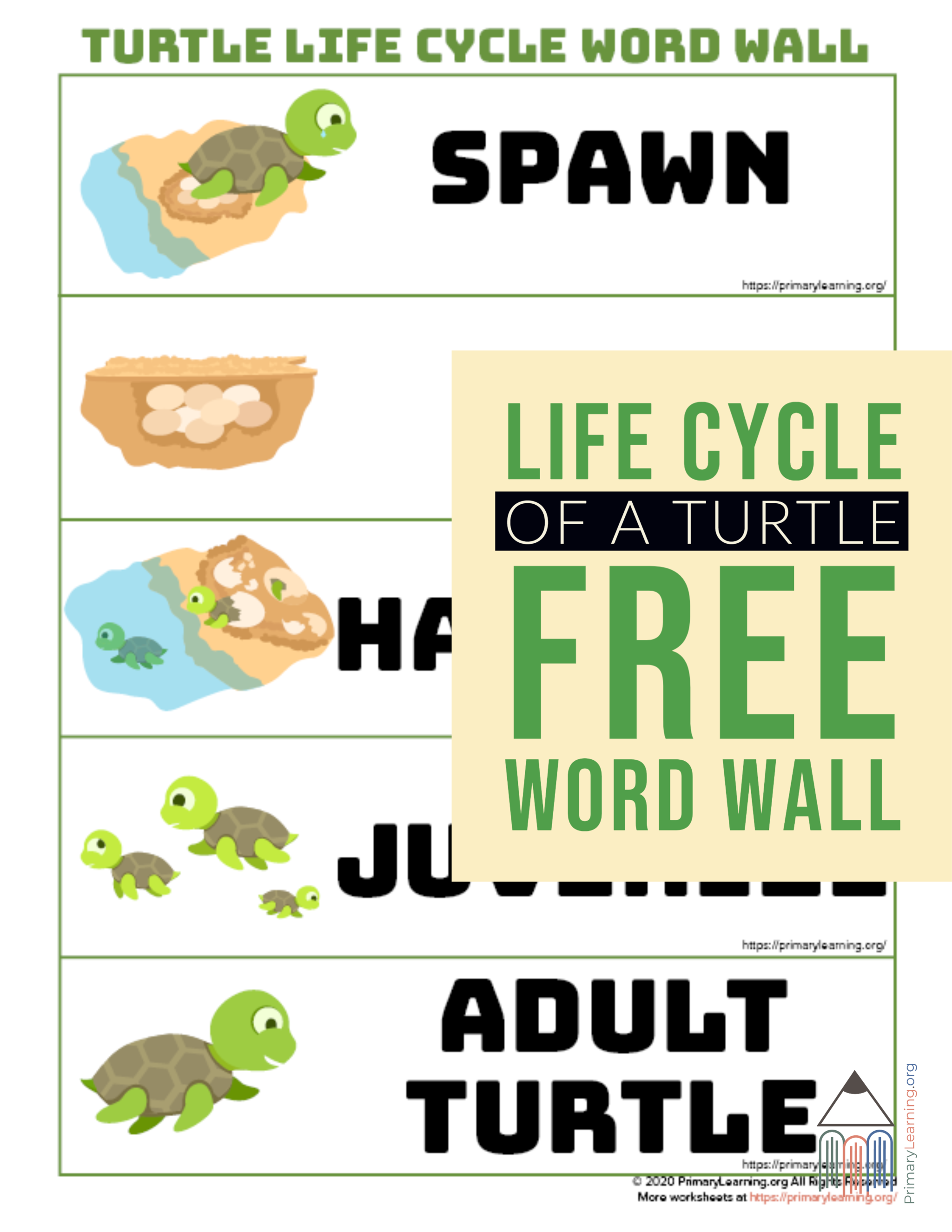 Turtle Life Cycle Word Wall In