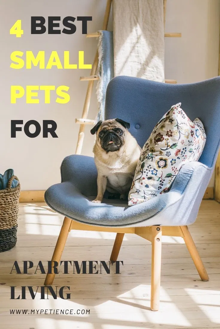 The Best Small Pets For Apartments Small Pet Carrier Tips With Images Best Small Pets Small Pet Carrier Small Pets