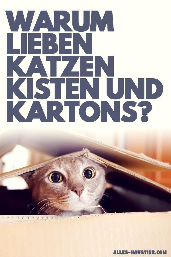 Warum Lieben Katzen Kartons Hier Sind Die Grunde Mit Bildern