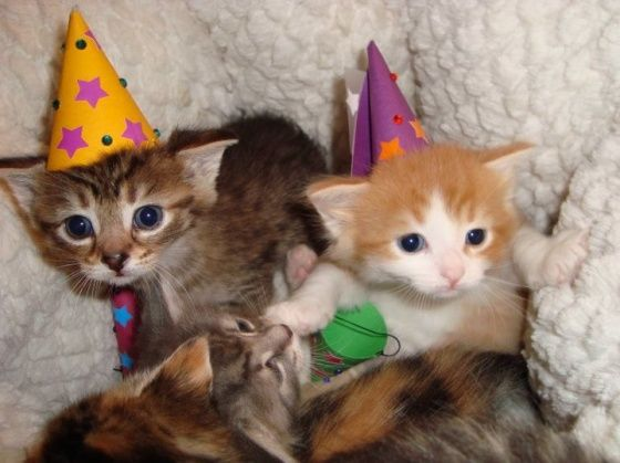 Kittens In Birthday Hats