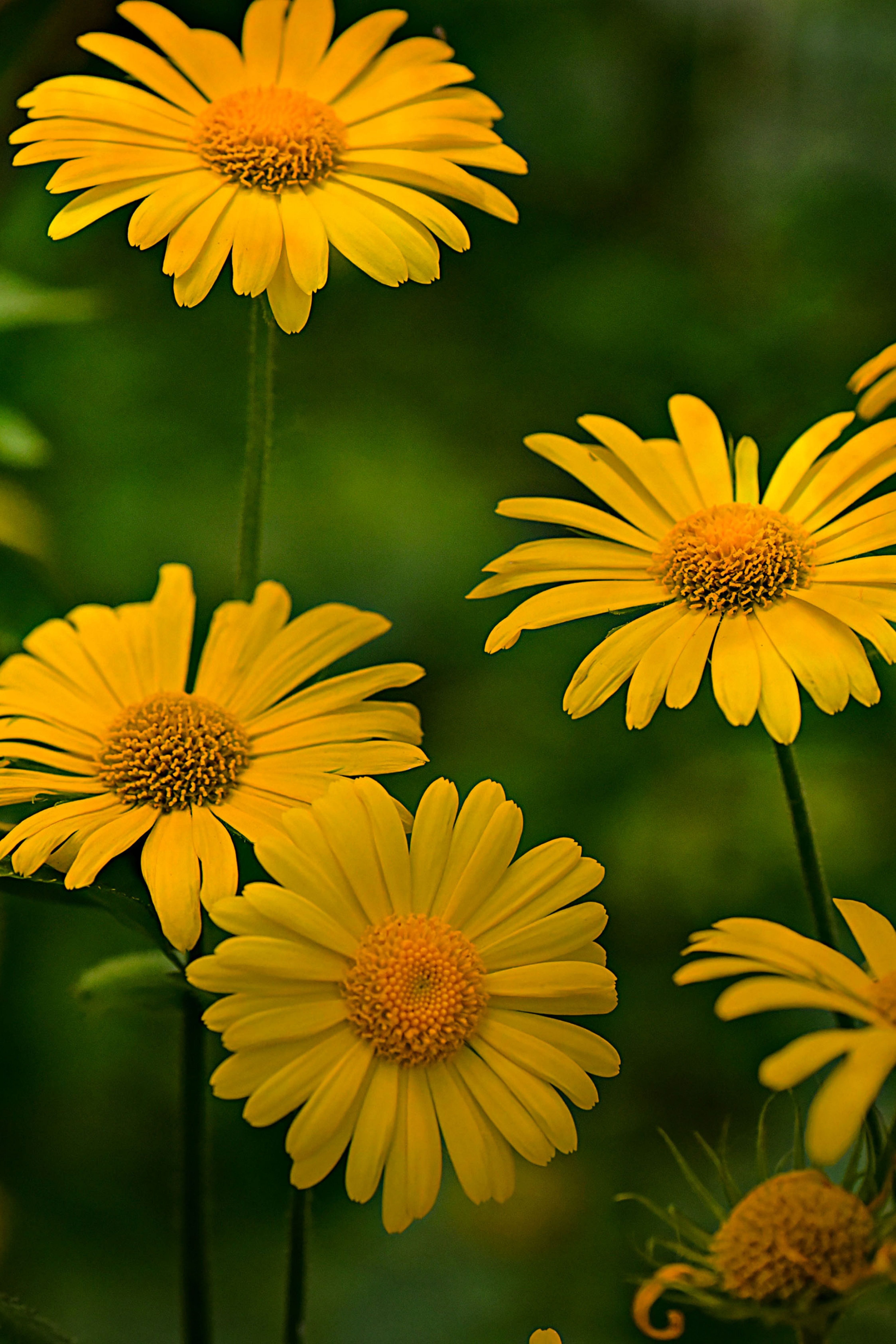 Flowers Yellow Green Leaves Field Plants Photooftheday