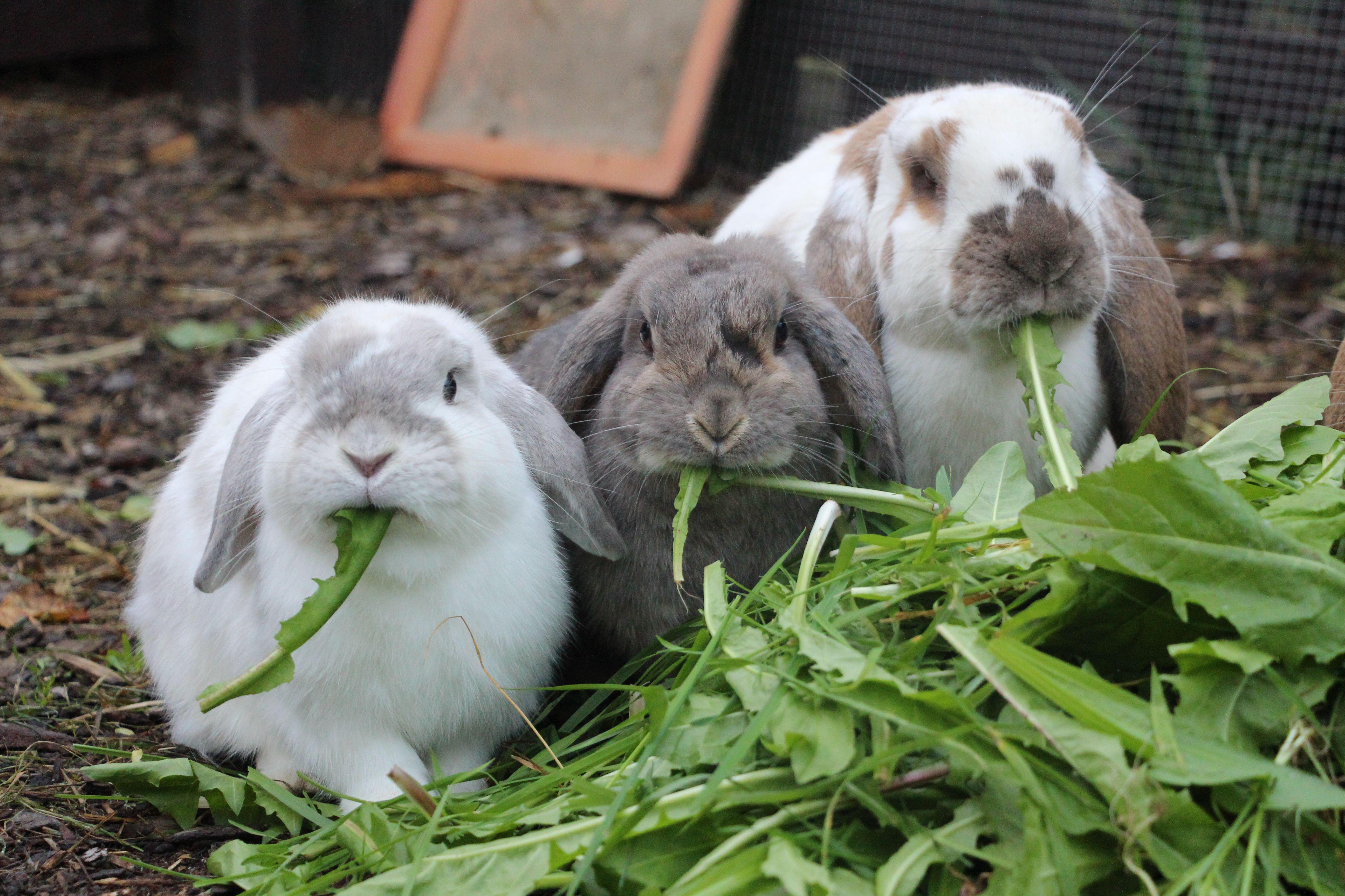 Pin Von Sylvia Schweiger Auf Hasen Kaninchengehege Kaninchen