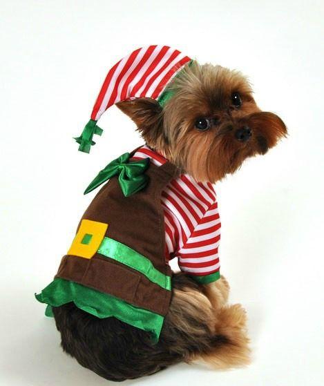 Santa's Lil Elf Helper Christmas Dog Costume - Santa's Lil Elf Helper Christmas Dog Costume Babies Dog Costumes