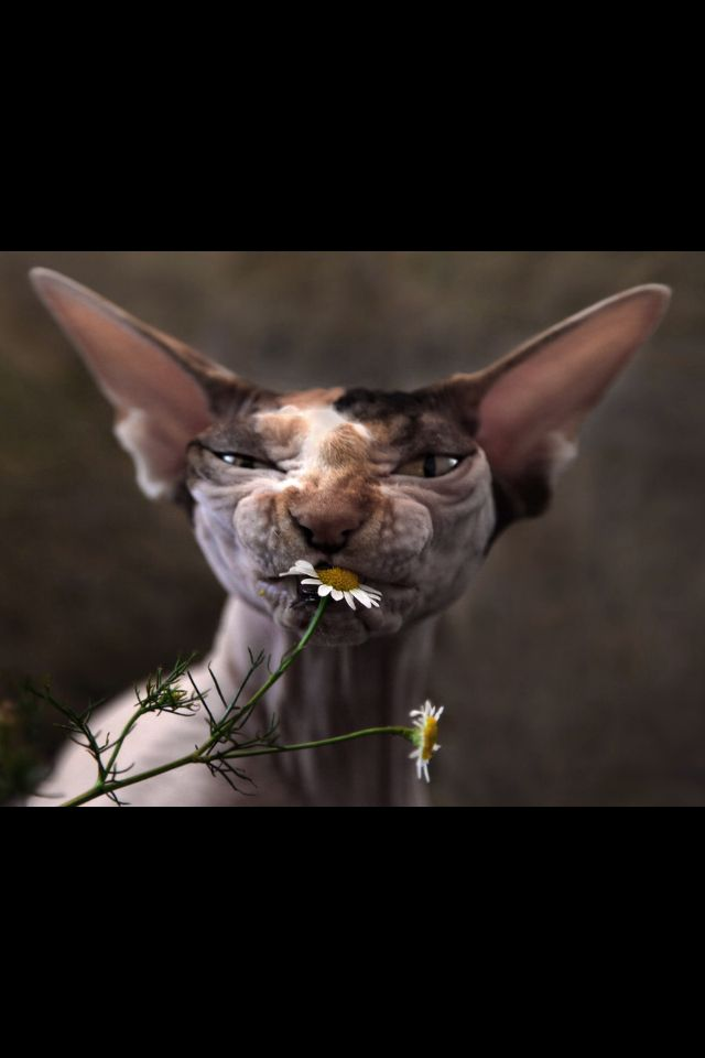 Titled chamomile by photographer Cats