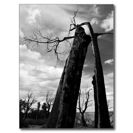 Grand Canyon National Park Burned Trees