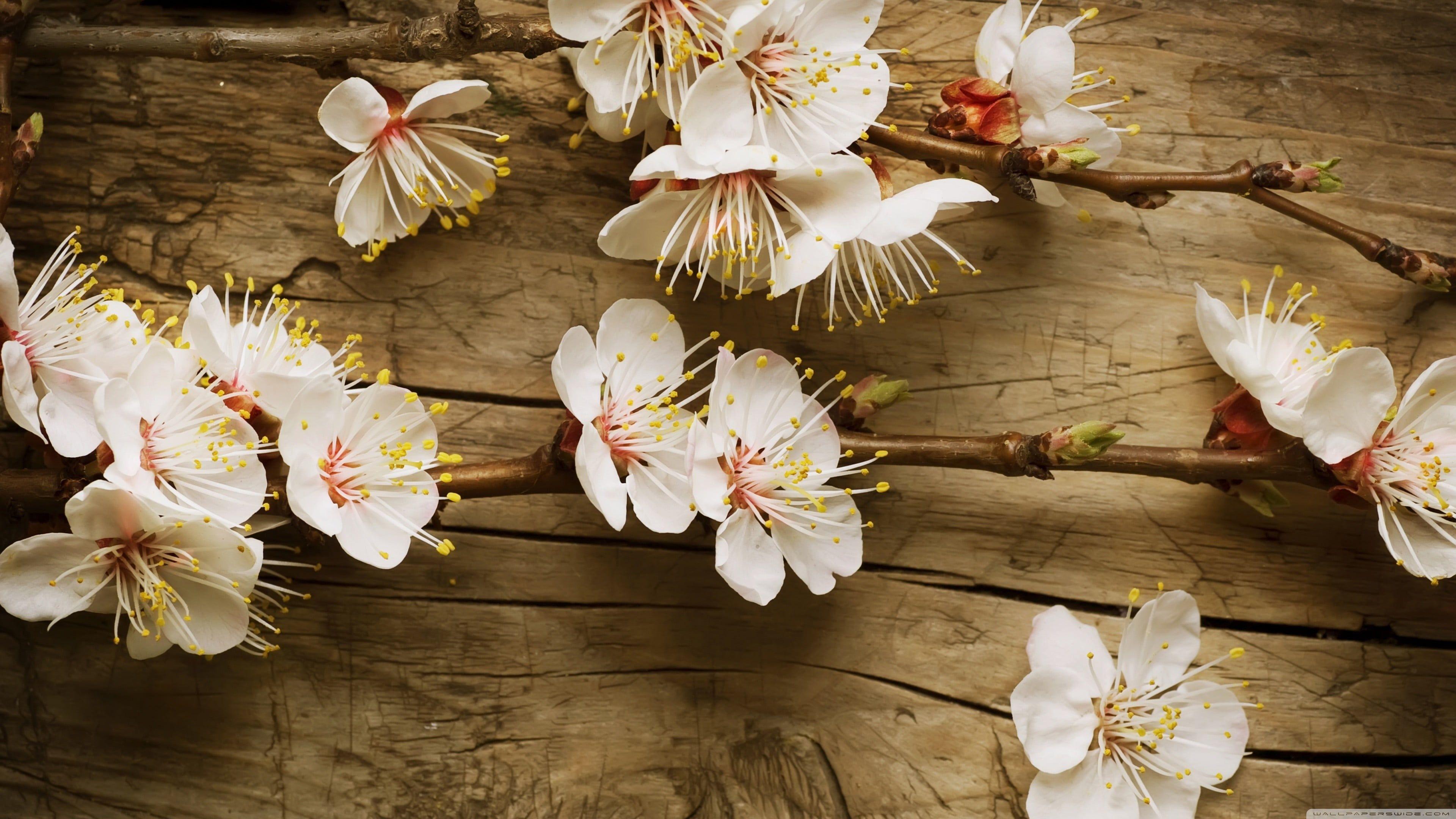 nature flowers plants 4K wallpaper hdwallpaper